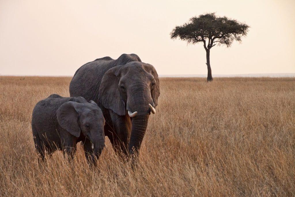 Un tour en Afrique